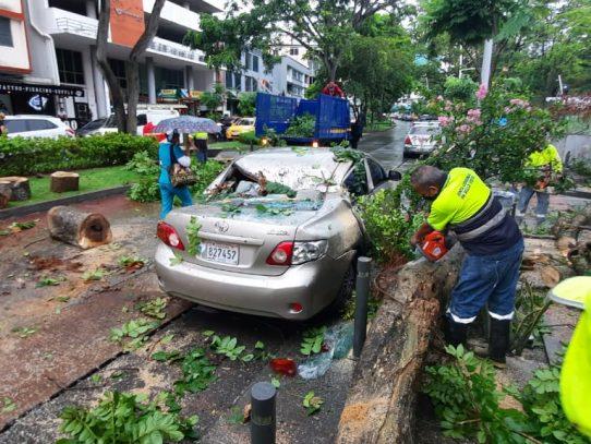 Caída de árboles y calles inundadas dejó torrencial aguacero de esta tarde