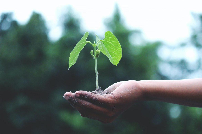 MiAMBIENTE reforestará 10 hectáreas en 13 puntos diferentes de Chiriquí
