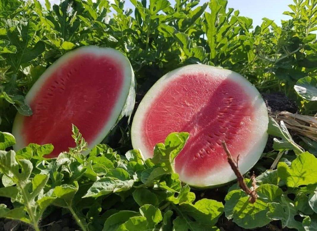 Aporte de las agroexportaciones: cerca de 100 millones de balboas en cinco primeros meses