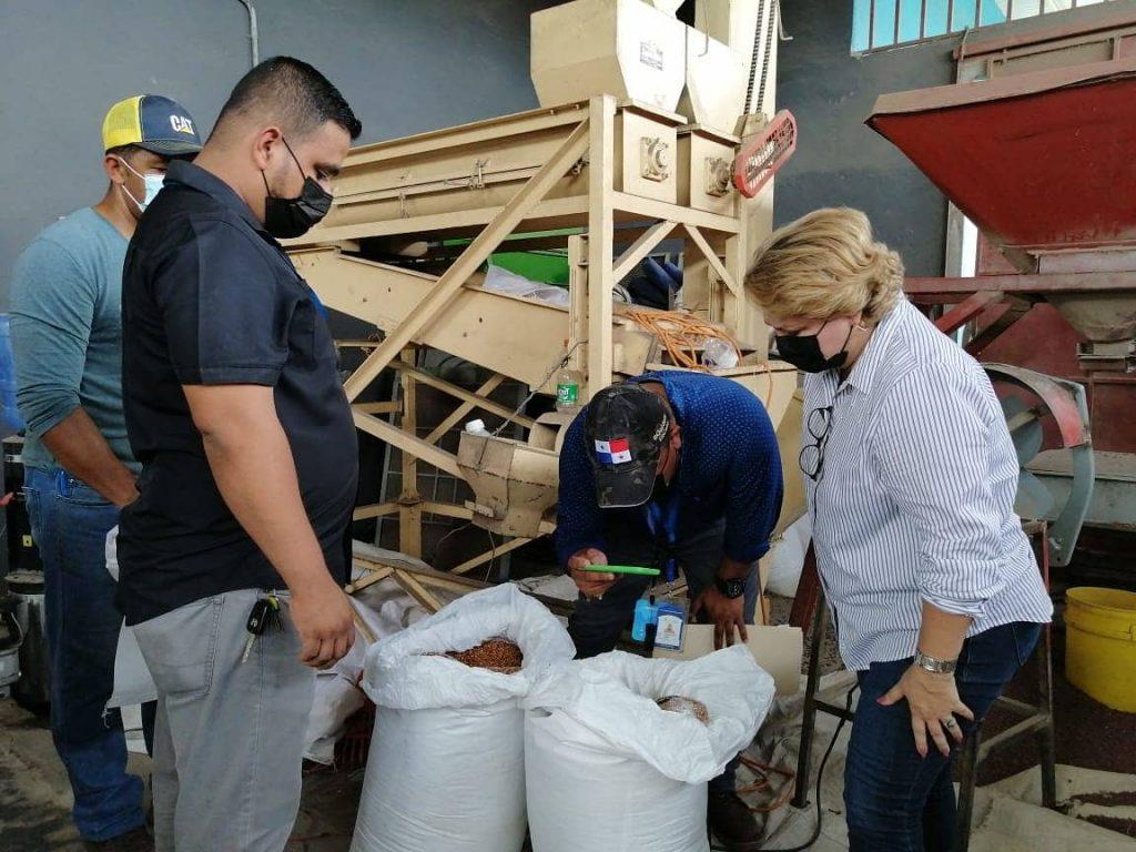 Gobierno compra 3,400 quintales de frijol chiricano para el Panamá Solidario