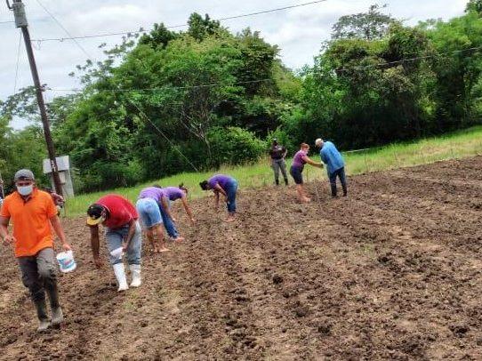 Privados de libertad de Llano Marín participan en siembra de arroz