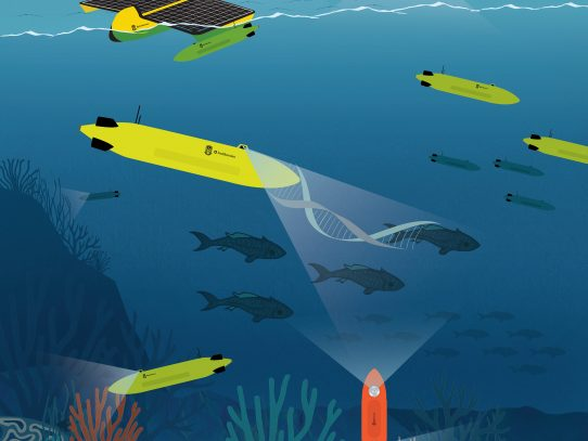 'Ocean Decade' de las Naciones Unidas respalda dos proyectos de conservación marina del Smithsonian