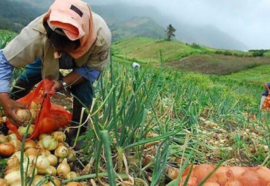 La Agencia Panameña de Alimentos iniciará operaciones en octubre