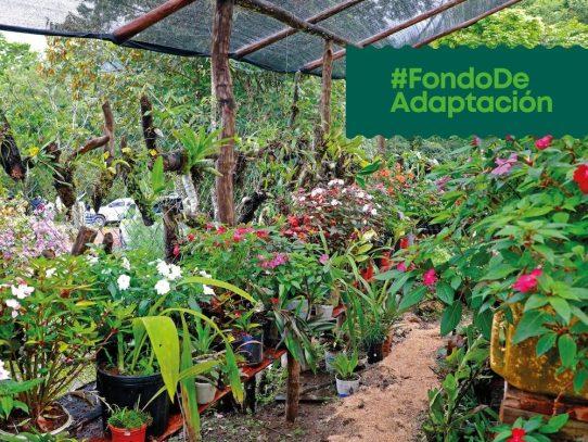 Acciones para crear capacidades de producción de orquídeas y naranjillas