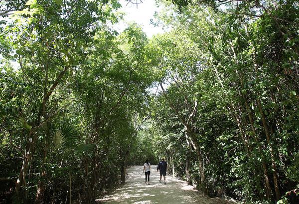 La Selva Maya gana casi 11.000 hectáreas con un proyecto multinacional