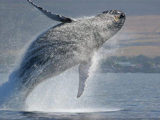 Día Mundial de las ballenas y delfines