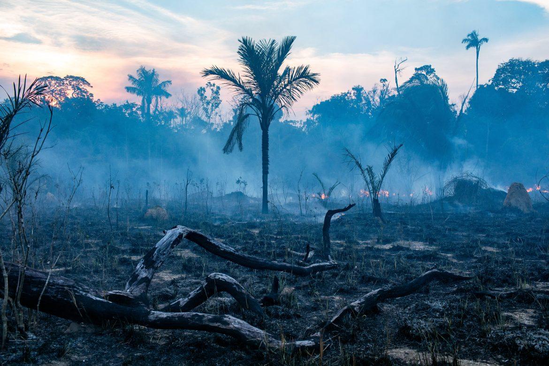 Áreas de la Amazonía pasaron de absorber dióxido de carbono a emitirlo