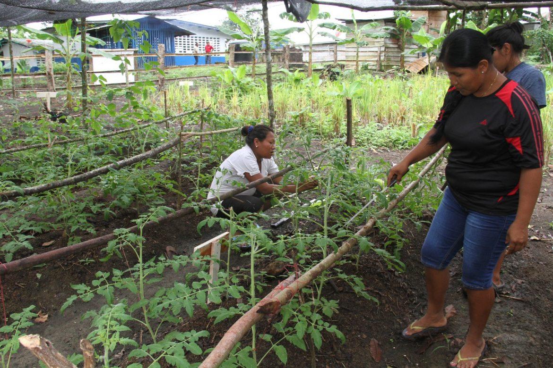 Gobierno apuesta a la agricultura familiar para reducir la pobreza extrema