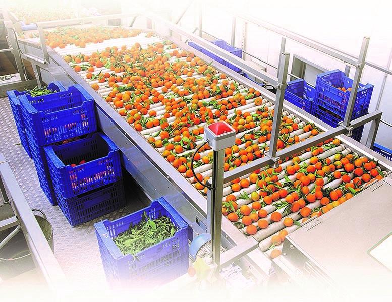 Inversionistas italianos evalúan construir plantas procesadoras de frutas en Panamá