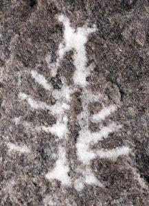 Descubrimiento de fósil