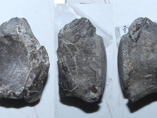Descubren en Chile un nuevo mosasaurio que vivió hace 66 millones de años