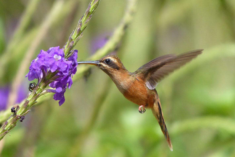 Pérdida de la biodiversidad a pesar de un siglo de protección
