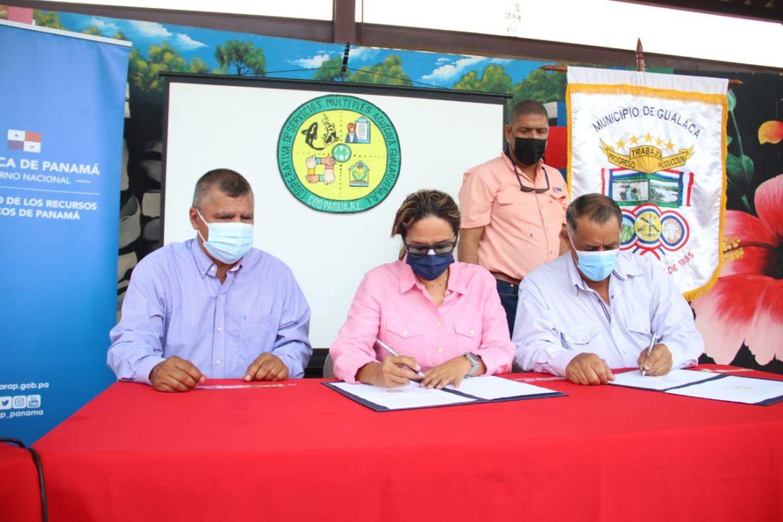 Desarrollarán cultivo de alevines de tilapia en Gualaca, Chiriquí