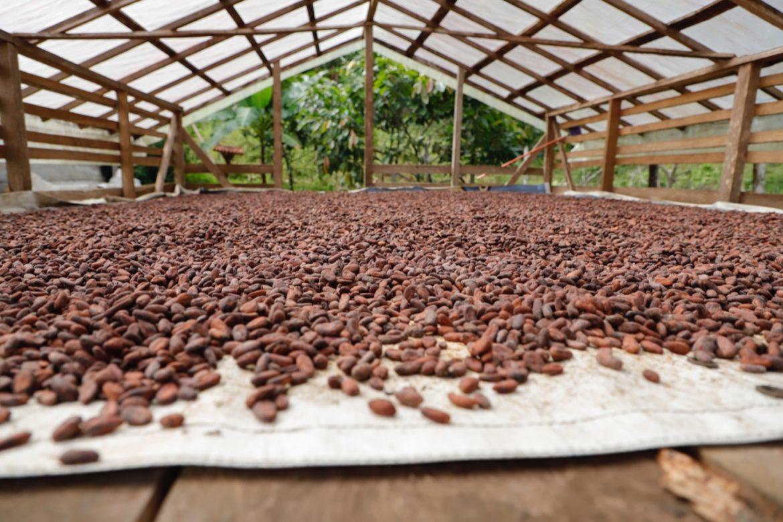 Diversificación de su oferta exportable es el rumbo que lleva Panamá