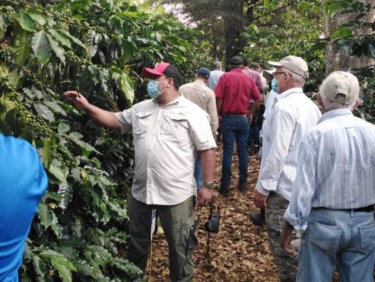 Cafetaleros chiricanos se capacitan en mejoramiento genético del rubro