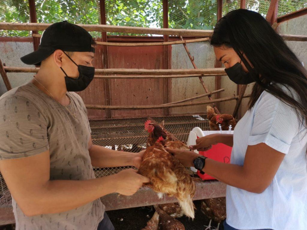MIDA desarrolla programa de inspección a granjas avícolas en Panamá Este