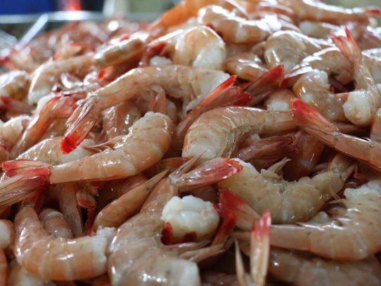 Extienden la veda del camarón hasta el 11 de octubre