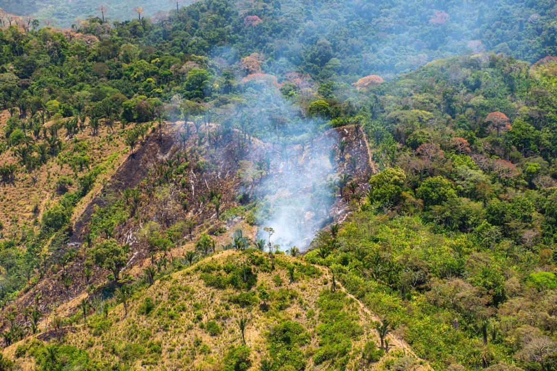Revelan lecciones sobre el impacto humano en los bosques tropicales durante el Antropoceno