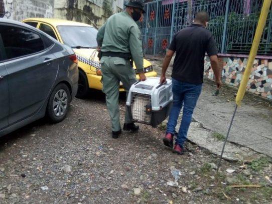 Fiscalía inicia investigación por presunto maltrato animal en Veranillo