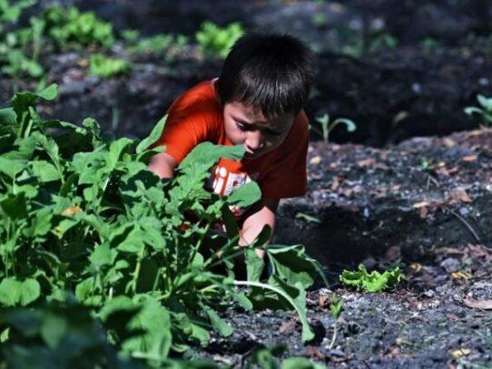 Niños cultivan huertos para sobrevivir a la pandemia en El Salvador