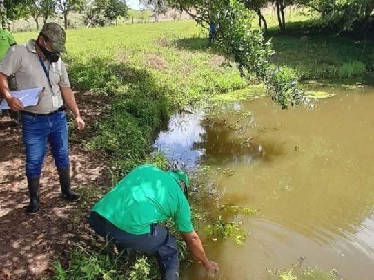 MiAmbiente investiga posible contaminación de la quebrada Cabuya en Ocú