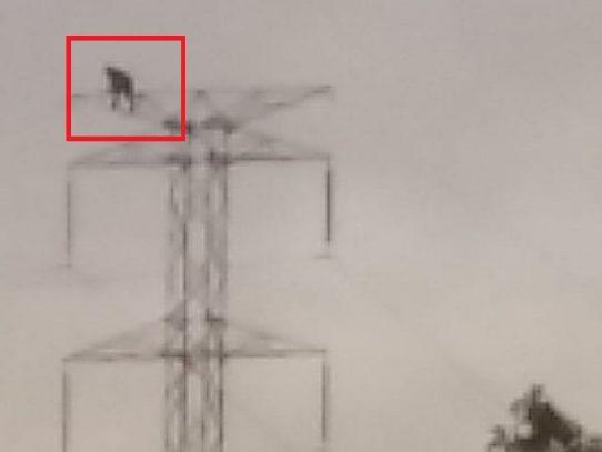 ETESA advierte de daños al país atentar contra el sistema de transmisión eléctrica