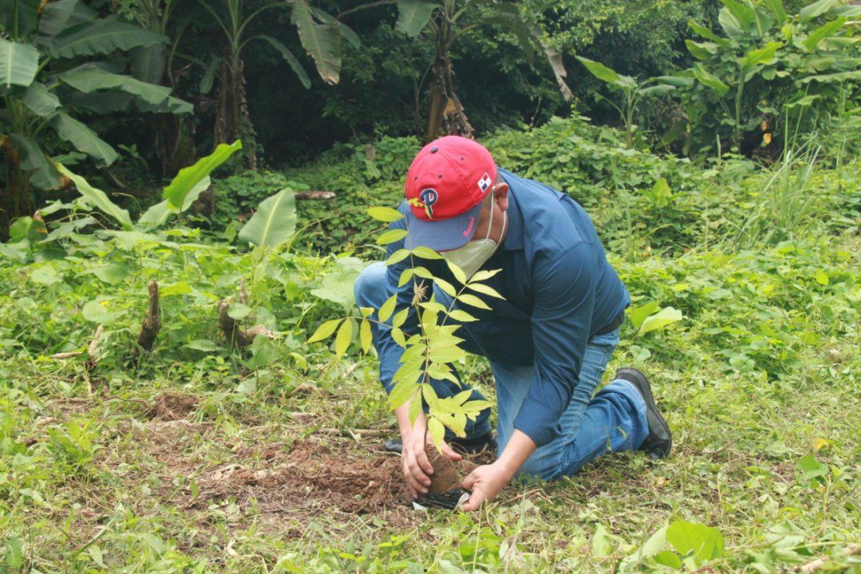 Siembran 100 árboles en Guna Yala en el Gran Día Nacional de Reforestación