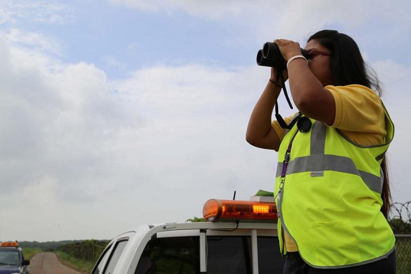 Nuevas rutas y aumento de gallinazos detecta monitoreo de aves migratorias en Panamá