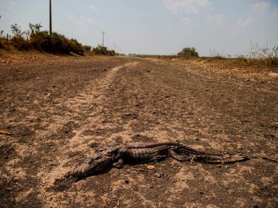 El mayor humedal tropical del mundo se ha convertido en un infierno