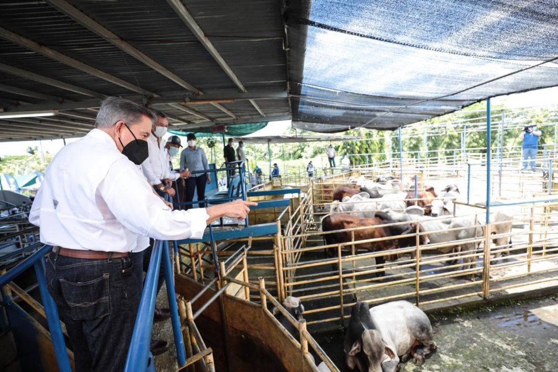 Presidente Cortizo impulsa desarrollo productivo en Veraguas