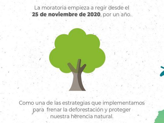 MiAmbiente suspende por un año el aprovechamiento de madera de bosques naturales
