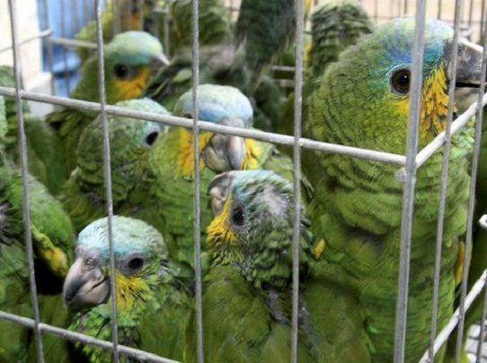 Miles de animales rescatados en operativo de Interpol contra el tráfico de especies