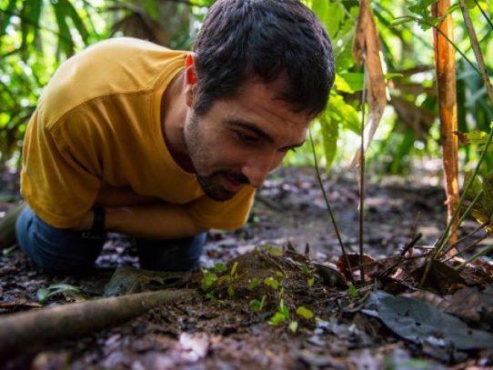 Las hormigas attini son agricultoras que domesticaron hongos hace casi 60 millones de años