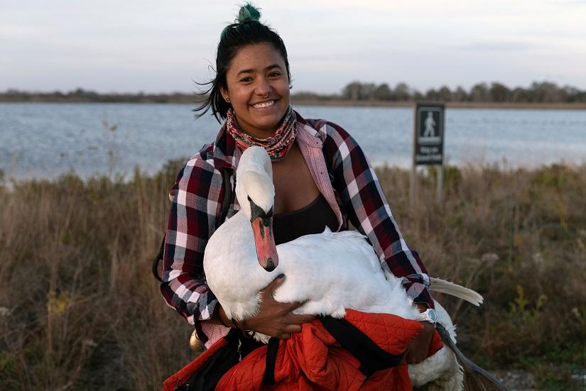 Un cisne enfermo es salvado tras una odisea de 37 kilómetros a pie, en auto y en metro