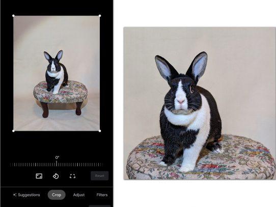 Cómo tomar mejores retratos de mascotas