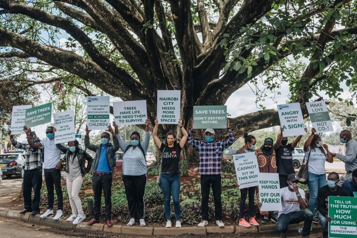 Un árbol de higos recibe un indulto en Kenia