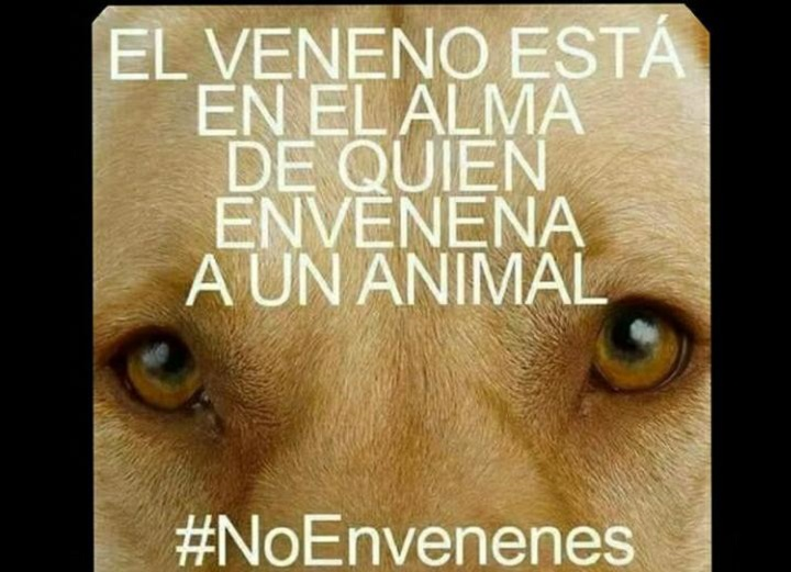 Convocan a prostesta en contra del maltrato animal para este 10 de noviembre