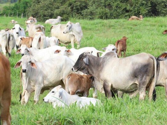 Exportaciones panameñas siguen estando lideradas por productos agropecuarios