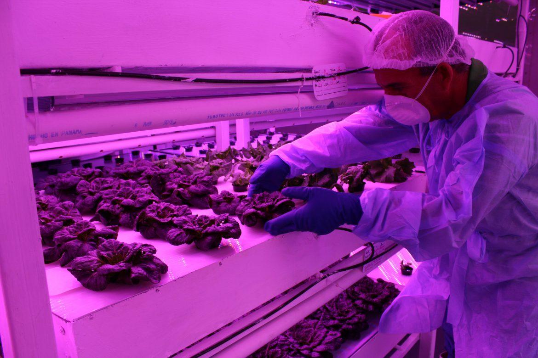 Potenciarán en Panamá la agricultura en ambiente controlado