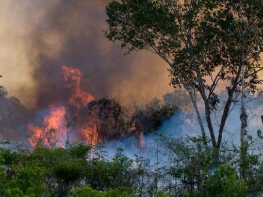 Ministro de Defensa dice que incendios forestales en Bolivia fueron provocados