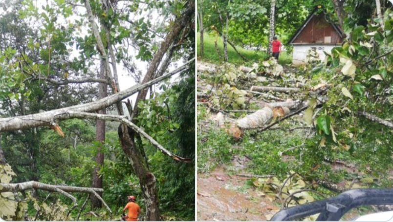 Sinaproc reporta caída de 22 árboles sobre varias viviendas en últimas 30 horas