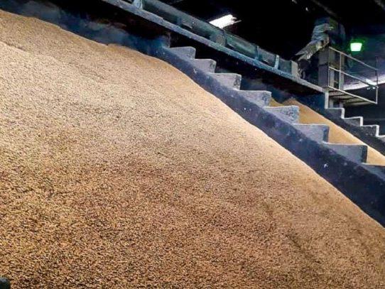 IMA convoca a productores de arroz para que oferten parte de sus cosechas