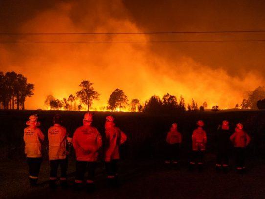 Los incendios de Australia, holocausto de la fauna