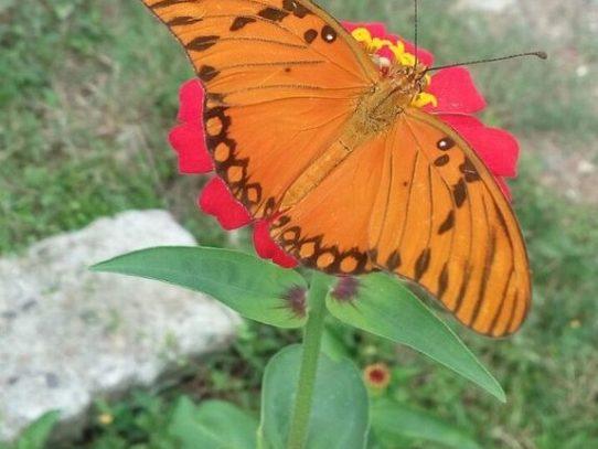 La biodiversidad  es la clave para la vida y el desarrollo