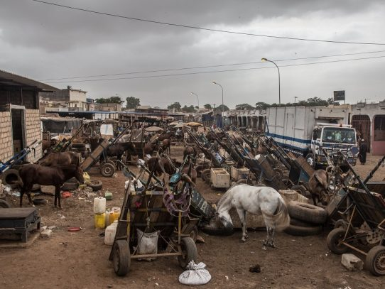 Caballos y automóviles compiten por las calles en Senegal