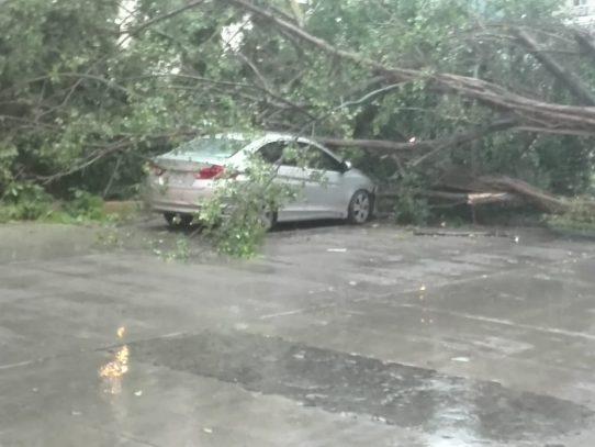 Un herido por caídas de árboles en Las Mañanitas y Punta Pacífica