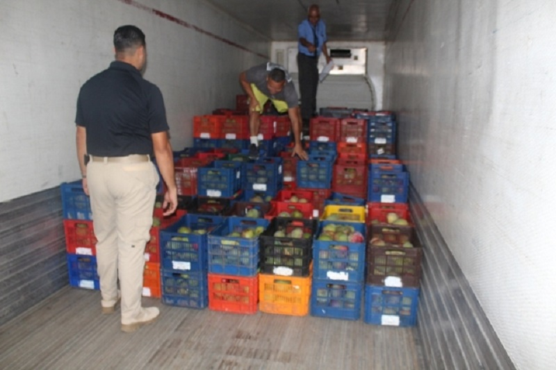 Decomisan mil 150 cajas de mango de presunto contrabando en David