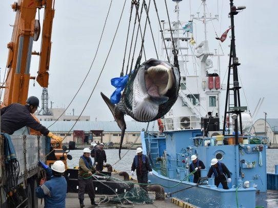 ¿La caza de ballenas es negocio en un mercado en declive?