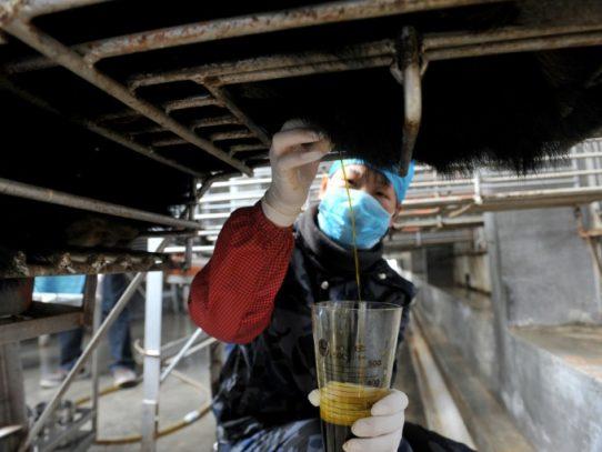 Luz verde de China a un medicamento con bilis de oso contra el covid-19