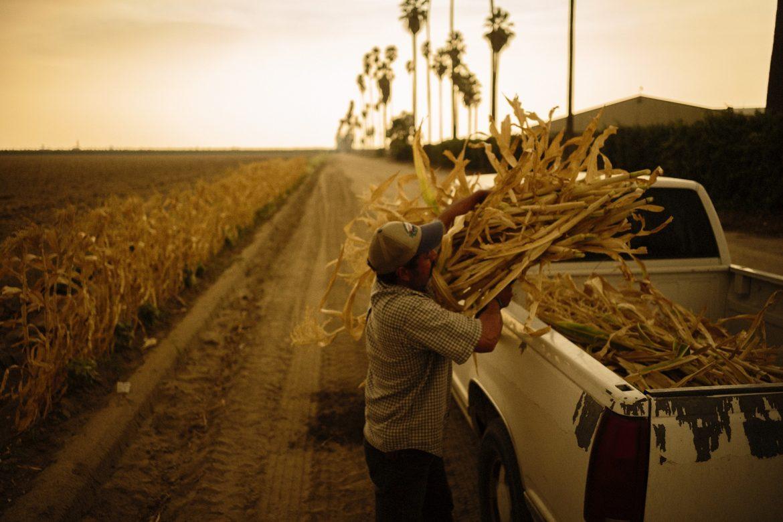 El calor, el humo y COVID afectan a trabajadores que alimentan a EE.UU.